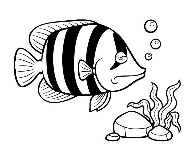 Angelfish Coloring Page