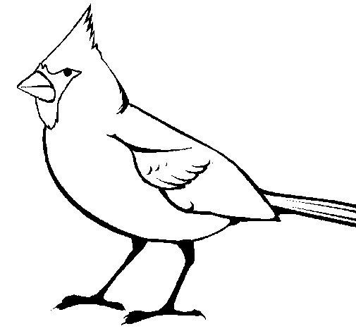 Cardinal coloring page Coloringcrewcom