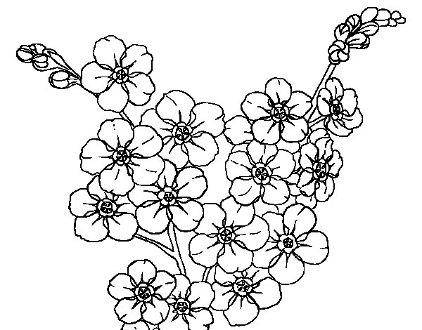 Cherry tree flower coloring page