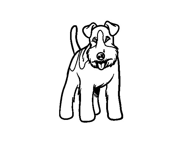 Fox Terrier dog coloring page