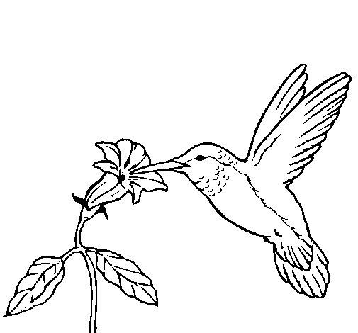 hummingbird and flower coloring page coloringcrewcom - Hummingbird Flower Coloring Pages