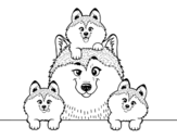 Husky family coloring page