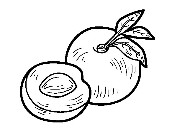 nectarine coloring page