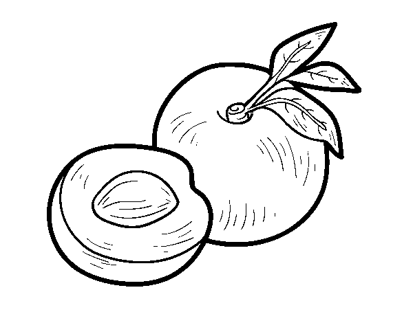 nectarine coloring page coloringcrewcom