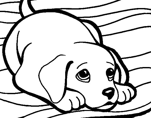 Puppy on rug coloring page