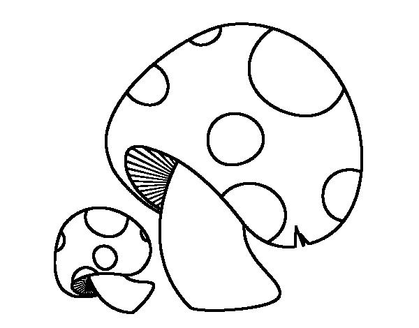 Red pine mushroom coloring page Coloringcrewcom
