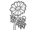 Wild daisy coloring page