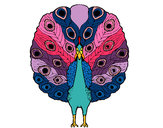 Coloring page Peacock painted byShebear