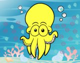 Atlantic white-spotted octopus