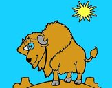 Bison in desert