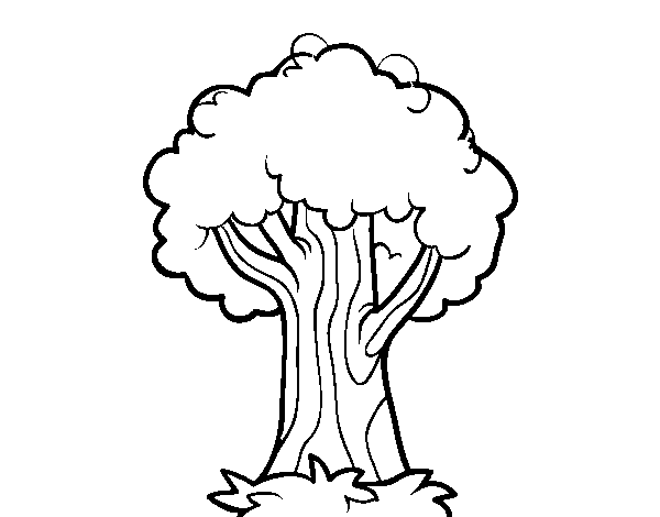An oak coloring page