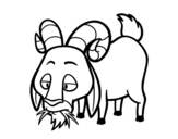 Goat eating coloring page