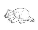 Iberian badger coloring page