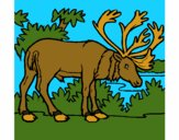 Coloring page Elk painted byCherokeeGl