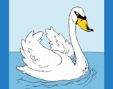 Coloring page Swan in water painted byLornaAnia